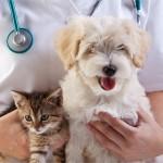 Cuidado veterinário gratuito para os seus bichinhos em Fortaleza
