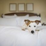 Hotel para cachorro e gato em Fortaleza