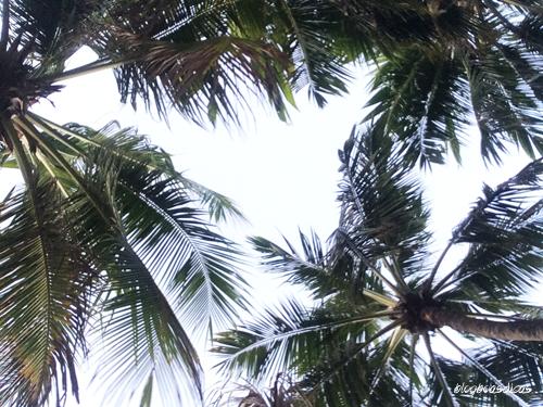 Beach-Park-Blog-Boas-Dicas-01