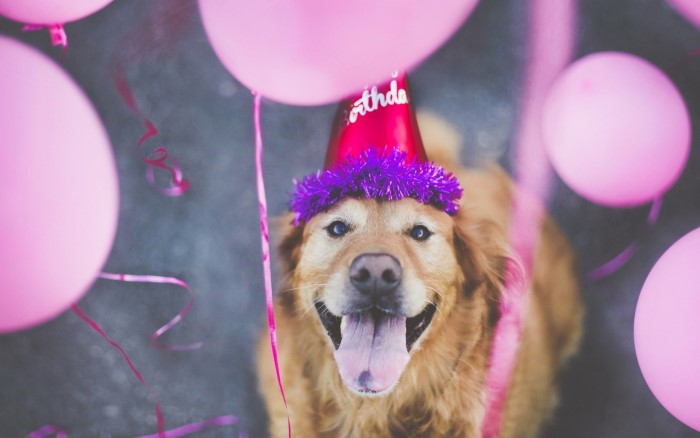 aniversario-30-anos-blog-boas-dicas